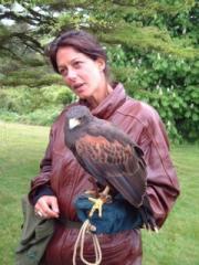 new-hawk