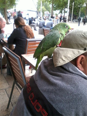 The Urban Parrot