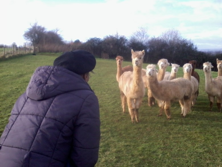 More On Alpacas